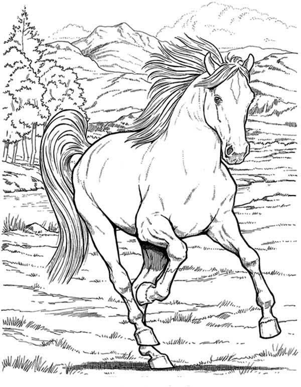 Favori Coloriage cheval sauvage imprimer - 1001 Animaux CG54