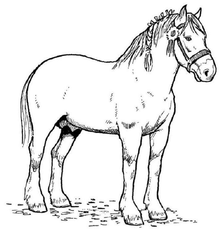 Coloriage chevaux qui se cabre