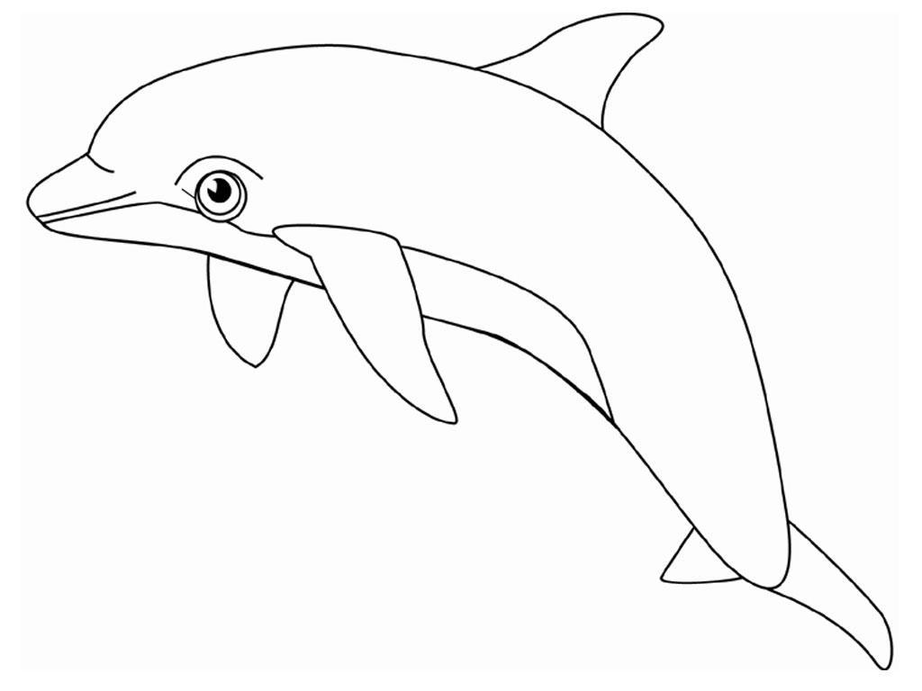 Coloriage de dauphin sur l'ordinateur