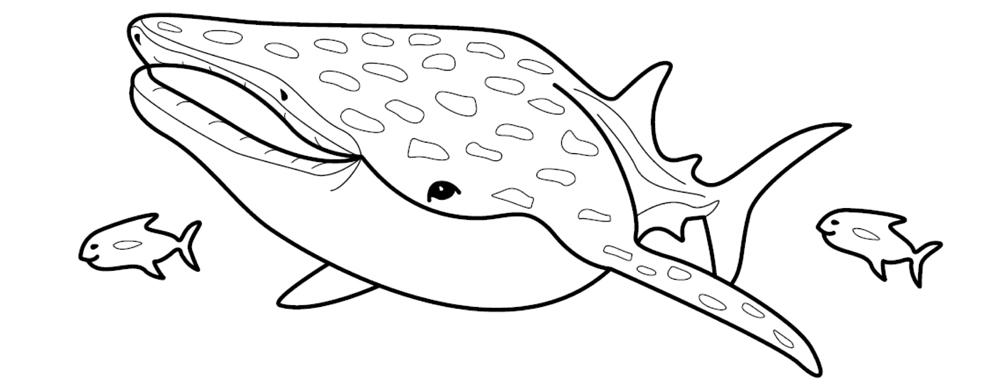 Coloriage de requin baleine 1001 animaux - Requin en dessin ...