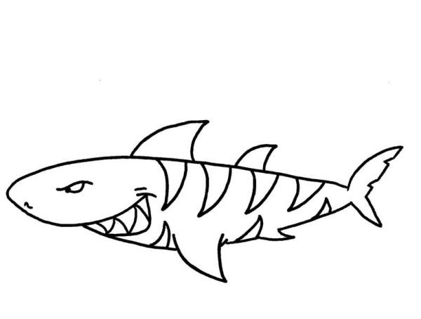 Coloriage De Requin Tigre 1001 Animaux