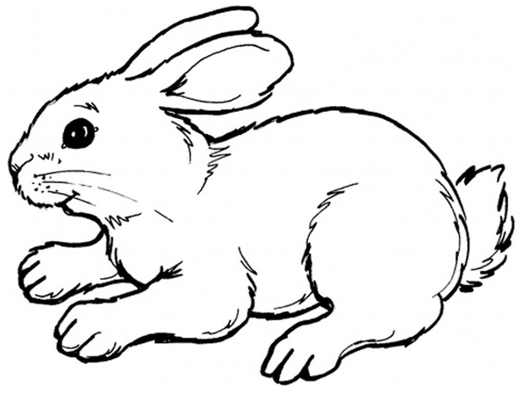 Coloriage de vrai lapin