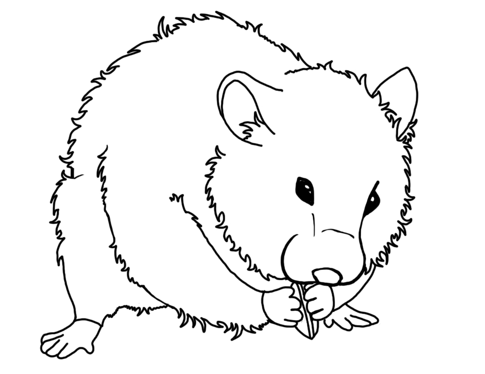 coloriage hamster a imprimer colorier  1001 animaux