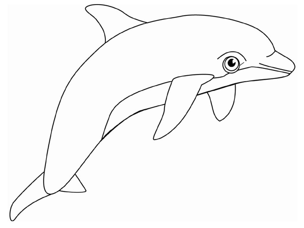 Coloriage imprimer dauphin