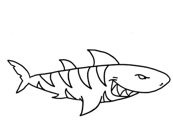 Coloriage a imprimer requin tigre