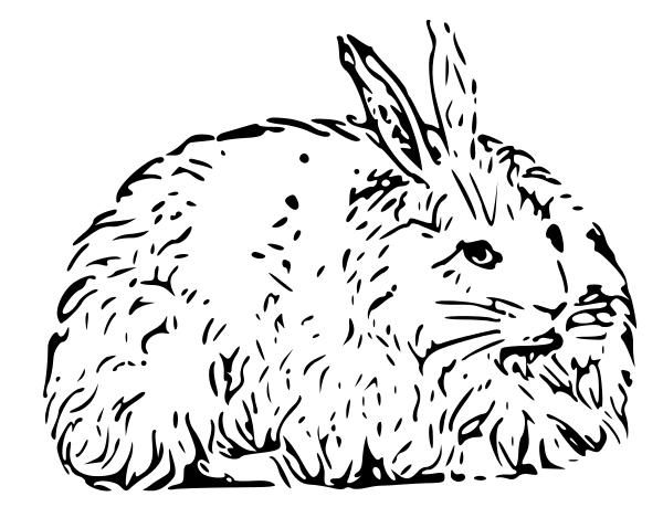 Coloriage lapin angora