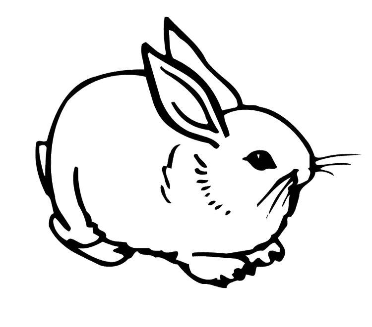 Coloriage lapin cretain gratuit