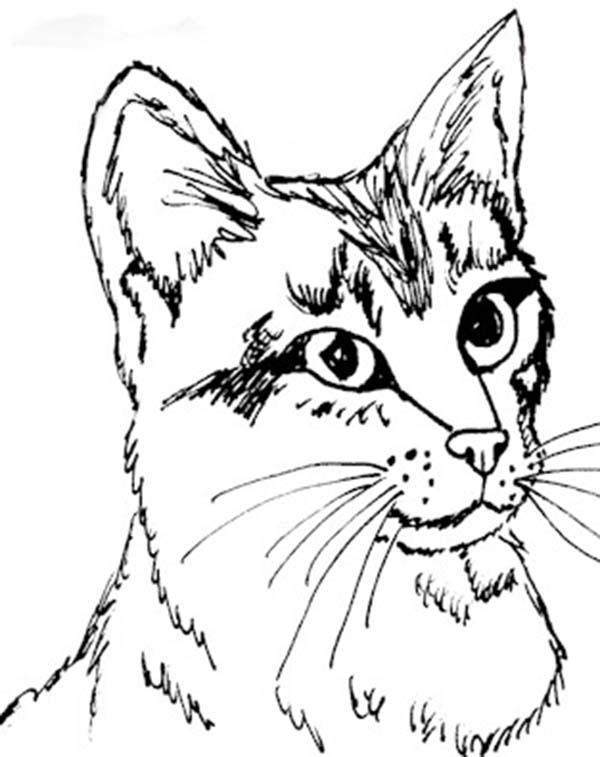 Coloriage le chat chapeauté