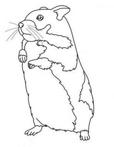 Coloriage magique hamster