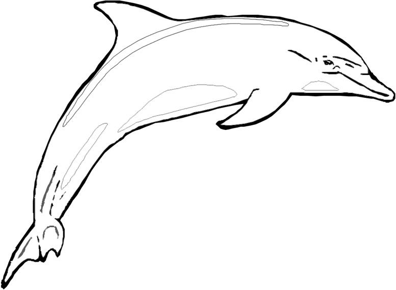 Coloriage requin et dauphin