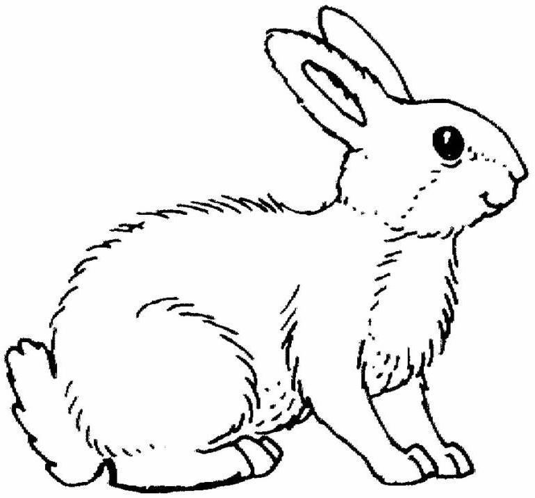 Coloriage sur ordinateur lapin