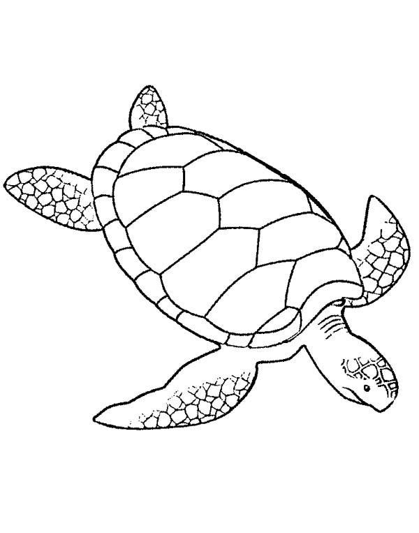 Coloriage tortue verte 1001 animaux - Dessin d une tortue ...